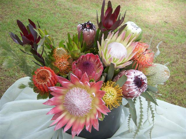 The Deluxe gift box assortment: It's safe to say that the Deluxe is a bolder statement than our large gift box. It consists of 11-12 premium long stemmed flowers with complimenting foliage. With a minimum of two King flowers, and a greater assortment of seasonally available minks, banksia, pincusions, and exotic tropicals, this is a beautiful visual display. The recipient will need a large vase to accommodate this awesome arrangement.